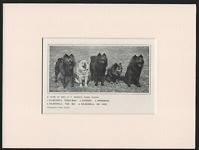 Chow Chow Named Dogs Old Antique 1912 Dog Print Ready Mounted