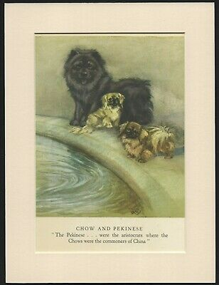 CHOW CHOW AND PEKINGESE OLD 1940 DOG ART PRINT by GEORGE VERNON STOKES MOUNTED