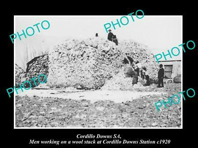 OLD LARGE HISTORIC PHOTO OF THE CORDILLO DOWNS WOOL STACK & WORKERS c1920