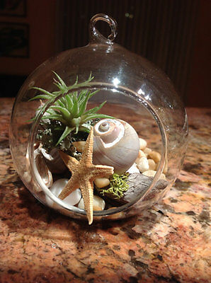Diy Hanging Air Plant Terrarium Kit Globe Glass Vase With Snail