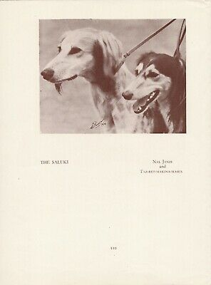 Saluki Gazelle Hound Two Named Dogs Old Vintage 1934 Dog Print Page