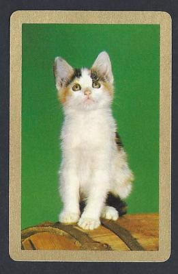 #950.300 vintage swap card -NEAR MINT- Kitten on green background, gold border