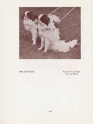 Japanese Chin Two Named Dogs Old Vintage 1934 Dog Page Print