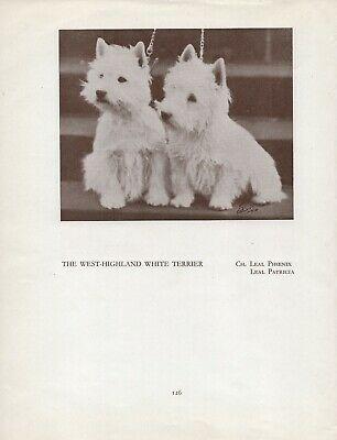 Westie West Highland White Terrier Dogs Old Vintage 1934 Named Dog Print Page