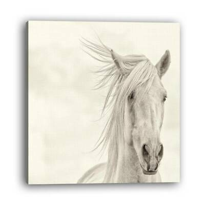 """8/12//1416"""" Living Room Decorative Painting White Horse Frame Modern Style"""