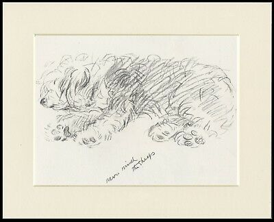 """Old English Sheepdog Dog Print """"Never Mind The Sheep"""" Lucy Dawson Ready Mounted"""
