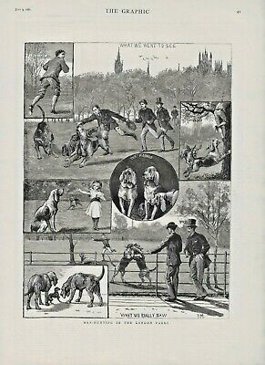 OLD ANTIQUE 1881 DOG PRINT BLOODHOUND DOGS MAN HUNTING IN LONDON PARKS b148