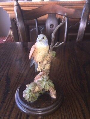 Country Artists CA 682 Kestral Ornament