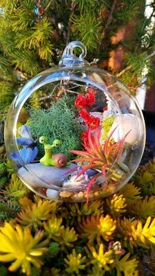 Diy Terrarium Kit Globe Glass Vase With Air Plant Mini Japanese