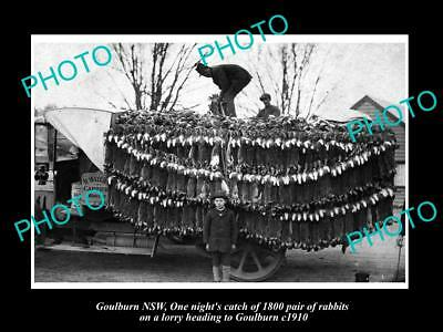OLD LARGE HISTORIC PHOTO OF GOULBURN NSW, TRUCK LOADED WITH 1800 RABBITS c1910