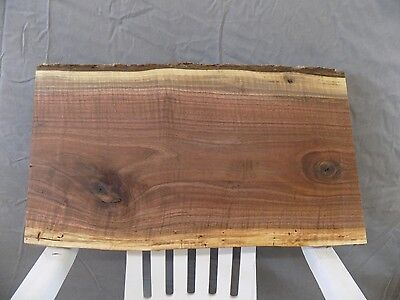 "23""x13"" CURLY Black Walnut Live Edge Bench Table Slab Lumber Board Solid Wood"