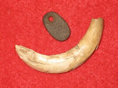 Authentic Native American artifact Illinois tusk and drilled bead D1