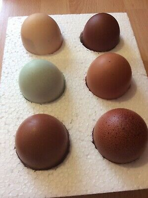 12 x Fertile Hatching Chicken Eggs - Mixed Pure Breeds From Our Breeding Pens