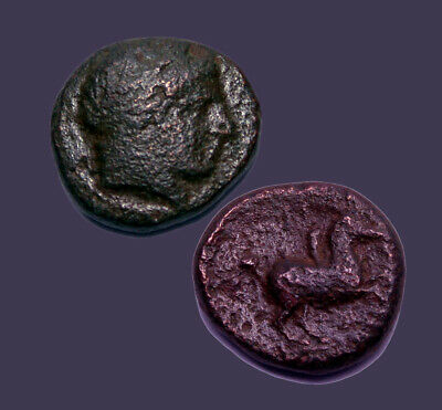 Archaios | Kings of Macedon Philip II Apollo / Horse with Rider | AE | Inv#14.4
