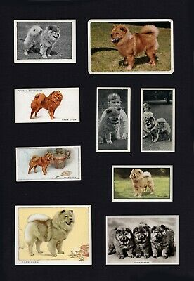 Chow Chow Mounted Set Of Vintage Dog Collectable Trade & Cigarette Cards