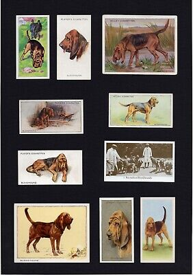 Bloodhound Mounted Set Of Vintage Dog Collectable Trade & Cigarette Cards
