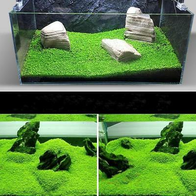 1000X Bulk Aquarium Mixed Grass Seeds Water Aquatic Home Fish Tank Plant
