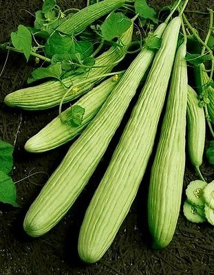 Cucumber Seeds, Armenian Yard Long, Non-Gmo Heirloom Seed, Longest Cucumber 75ct