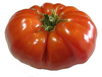 Tomato Seeds, Red Brandywine, Heirloom Non-Gmo Tomatoes, Big Juicy Slicers 50ct