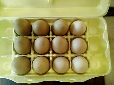 DOZEN NATURAL COLOR HAND-BLOWN CHICKEN EGGS: Shades of Khaki and Camel