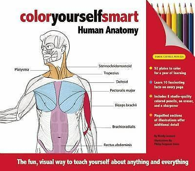 Human Anatomy : The Fun, Visual Way to Teach Yourself about Anything