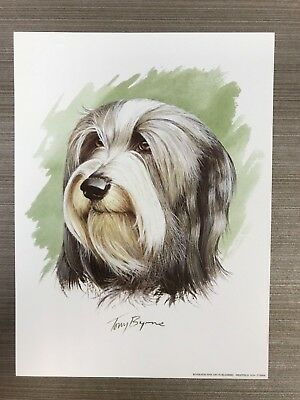 COLLIE Dog Print by Tony Bryne