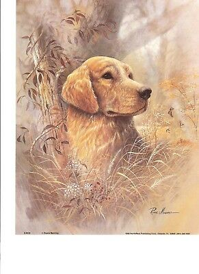Golden Labrador  Print by Ruane Manning