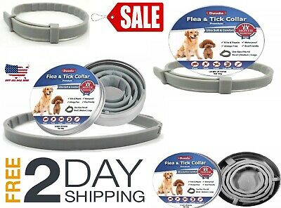 Bayer Duuda (remplacement)  Flea & Tick Collar for  Dogs
