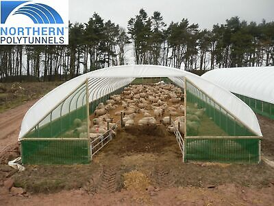 24ft Wide Sheep House - Sheep Polytunnel, Sheep Shelter, Farm Equipment Hay Barn