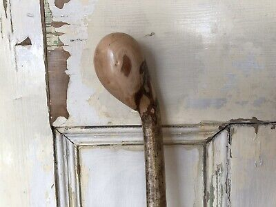 Stunning Large Handled Vintage Hazel Knob Stick Walking Stick