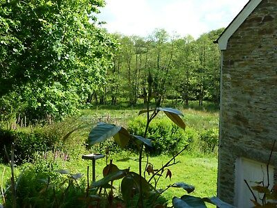 Vegan Friendly Holiday Cottage In Cornwall Sleeps2/3 - Wildlife, 3 Acres-Dog :)