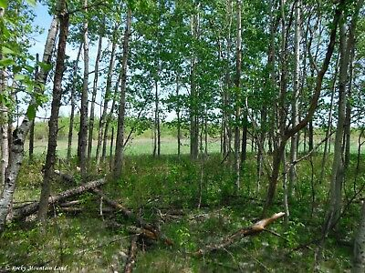 10 Acres Minnesota Trees And Pasture County Road Frontage 1 Mile To Canada