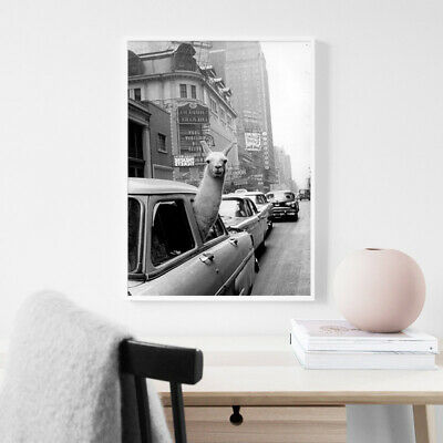 Black White Alpaca Poster llama Taxi Vintage Canvas Print Modern Home Decoration