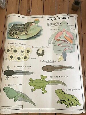 French Vintage Educational Poster Mid-century 1960s Double Sided Animals