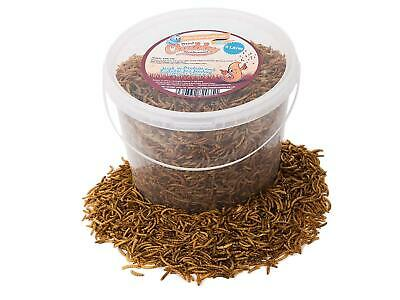 5 Litres Chubby Dried Mealworms W/ Free Delivery For Wild Birds Only Pet Supply