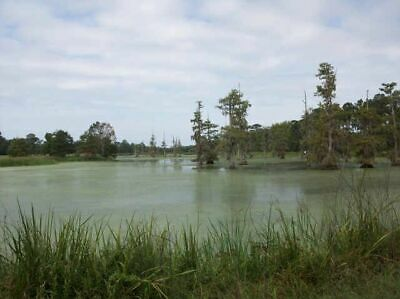.5202 Acres of land in Lake Water Wheel States, San Jacinto County