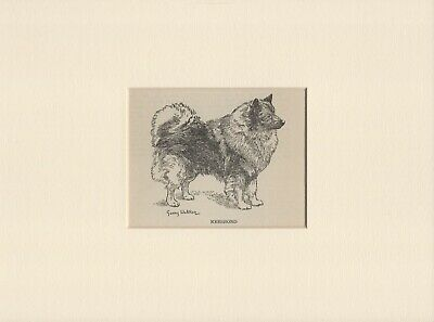 KEESHOND OLD VINTAGE 1940's DOG PRINT by GERRY WALKER READY MOUNTED