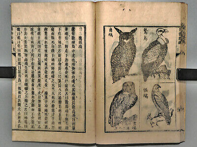 19thC Science by Hobson animals Meiji era antique Japanese woodblock print book