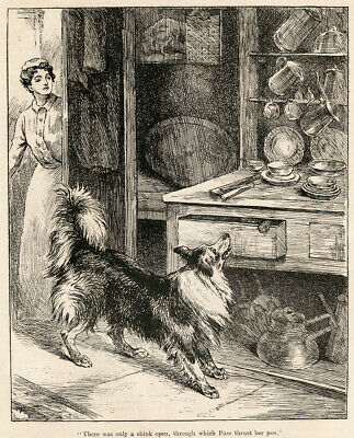Rough Border Collie Sheepdog Dog Antique Print Engraving 1915