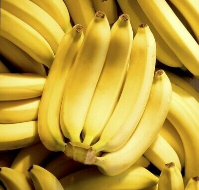 100 Banana Tree Seeds Mixed Exotic Tropical Fruit  Indoor Plants Mini Bonsai