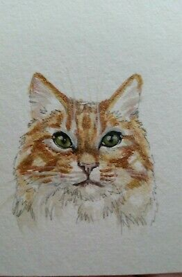 Watercolor Painting original art pet orange gold tabby cat ACEO HalieFrench