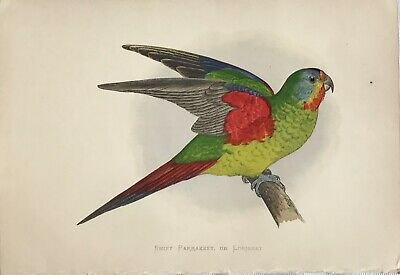 The Pigeon Lover by Eugene Remy Maes Feed Bird Hen Cat 8x10 Print Picture 1545