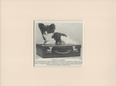 PAPILLON ON A SUITCASE OLD VINTAGE 1930's DOG PRINT READY MOUNTED