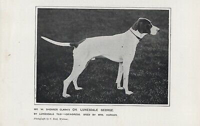 Pointer Named Champion Old Antique 1905 Part Page Dog Print