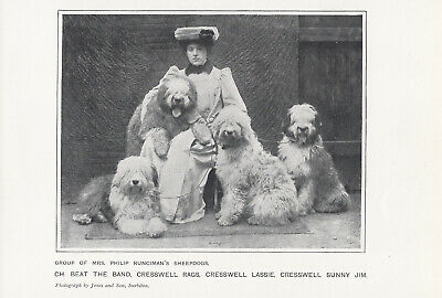 Named Old English Sheepdog Group And Lady Owner Antique 1905 Part Page Dog Print