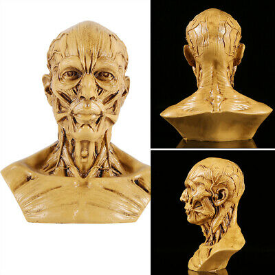 Resin Human Anatomical Skull Head Muscle Bone Artist Drawing Model Height Yellow