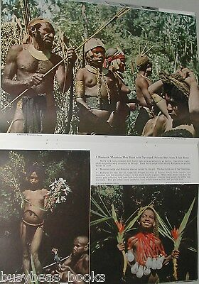 1951 magazine article NEW GUINEA expedition, bird hunting, Native info, color