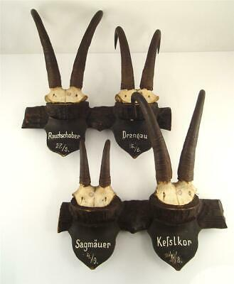 4 antique Austrian Black Forest CHAMOIS Horns Antlers on handcarved Woode Plaque