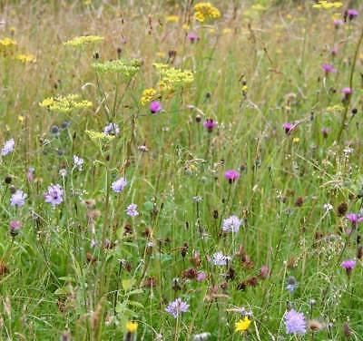Meadow Wild Flower Seed Mix 01  - 100% Flower Mix - 1g/5g/10g - Sow @ 1g/m2