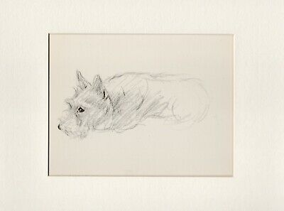 SCOTTISH TERRIER HAVING FUN WITH A HAIRBRUSH LUCY DAWSON DOG PRINT PAGE